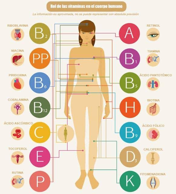 rol y funciones de las vitaminas en el cuerpo humano